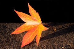 Red and Orange Fall Leaf Stock Images