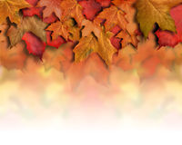 Red Orange Fall Leaves Background Border. An orange, red fall background top border for the season. Leaves are piled up with faded white copyspace for your text royalty free stock photography