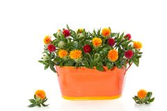 Red orange flower bouquet Stock Photography