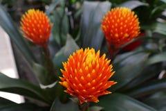 Red orange flower at lake garda Stock Images
