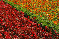 Red and orange flowerbeds. In park garden royalty free stock image