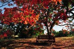 Red Orange Frangipani Temple Tree Stock Photo