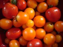 Red and orange garden cherry tomato still life stock photo