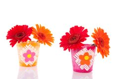 Red and orange gerbera daisies Stock Photos