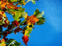 Red Orange and Green Leaves during Daytime Royalty Free Stock Image
