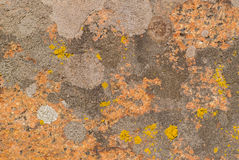 Red, orange and grey lichens Royalty Free Stock Photos