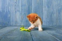 Free Red Orange Kitten At Blue Wood Stock Photos - 91164063