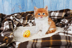Red orange kitten at blue wood Royalty Free Stock Image