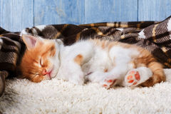 Red orange kitten at blue wood Stock Images