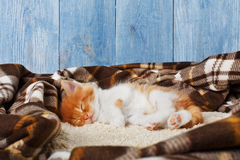 Red orange kitten sleeps at blue wood Royalty Free Stock Image