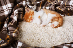 Red orange kitten sleeps at blue wood Royalty Free Stock Images