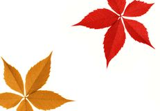 Red and orange leaf border Royalty Free Stock Photo