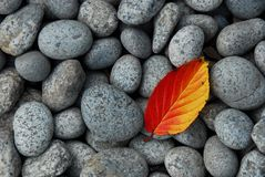 Red and orange leaf on pebbles Royalty Free Stock Photography