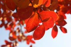 Red, Orange, Leaf, Petal royalty free stock photos