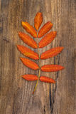 Red-Orange Leaf of Rowan Lying on a Wooden Board. Red-orange leaf of rowan lying on a rough wooden board Stock Images