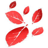 Red and orange multi-colored falling leaves Royalty Free Stock Photography