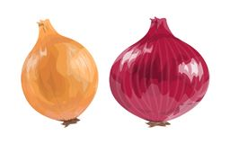 Red and orange onion. Royalty Free Stock Photo