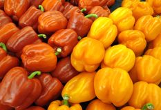 Red and Orange Peppers. Freshly picked peppers for salads and cooking stock image