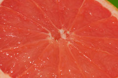 Red orange pulp Stock Images