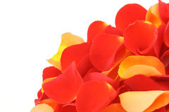 Red and orange rose petals. Background of red and orange rose petals close-ups royalty free stock image