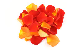 Red and orange rose petals Stock Photo