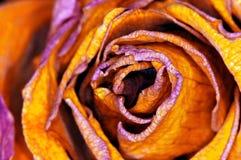 Red-orange Rose - rote Rose. Detail of yellow Rose - detail einer gelben Rose stock image