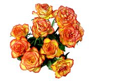 Red and Orange Roses stock photos