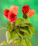 Red and orange roses flowers on green wood background, close up Royalty Free Stock Image