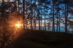 Red orange sunset through the trees on the Baltic sea. Royalty Free Stock Images