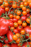 Red and Orange Tomatoes Stock Photo