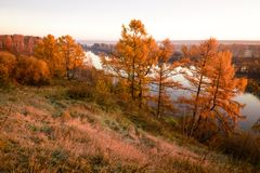 Red-orange trees Royalty Free Stock Photography