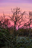 Red orange violet sunset scenery sky magenta Stock Photos