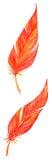 Red orange yellow bird feathers set isolated Stock Image