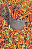 Red, orange and yellow chilli peppers at market Royalty Free Stock Photo