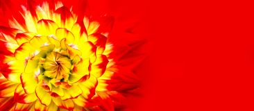 Red, orange, yellow flame colours dahlia. Red yellow dahlia close up macro photo as abstract geometric floral pattern details wide. Red, orange, yellow flame stock photo