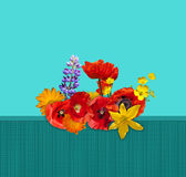 Red, orange, yellow flower on the green fence. Red poppies, yellow lily, blue lupine, orange marigold. Royalty Free Stock Photo