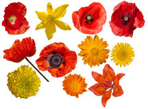 Red, orange, yellow garden flowers isolated. View from above. Royalty Free Stock Images