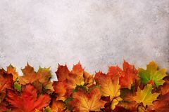 Red, orange, yellow and green maple leaves on gray concrete background. Golden autumn concept. Sunny day, warm weather. Top view. Banner royalty free stock photos