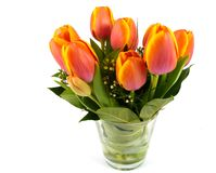 Red orange and yellow tulips in spring Stock Image