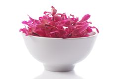 Red orchid in  bowl Stock Images