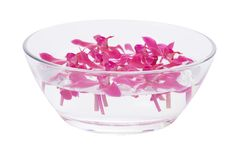 Red orchid floating Stock Images