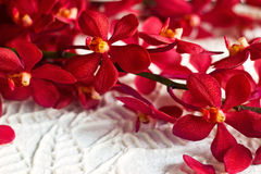 Red orchid flower on paper texture leaves shape background, soft focus. Red orchid flower on paper texture leaves shape background royalty free stock images