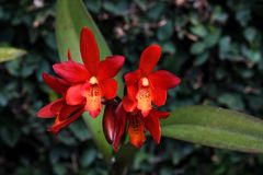 Red orchid flower. Some orchid flowers beautiful and red Stock Photos