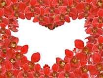Red orchid flowers heart shape frame on white Stock Images