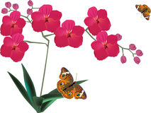 Red orchid flowers and two butterflies Stock Images