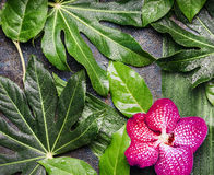 Red Orchid flowers and wet tropical leaves with water drop arrangement , nature background Stock Photo