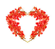 Red orchid heart Stock Photography