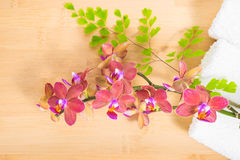 Red  orchid, towels and   branch of fern on bamboo Royalty Free Stock Image