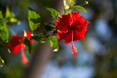 Red orchid on a tree in Thailand Stock Photos