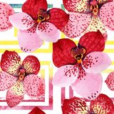 Red orchid vanda flower. Floral botanical flower. Seamless background pattern. Fabric wallpaper print texture. Aquarelle wildflower for background, texture royalty free illustration